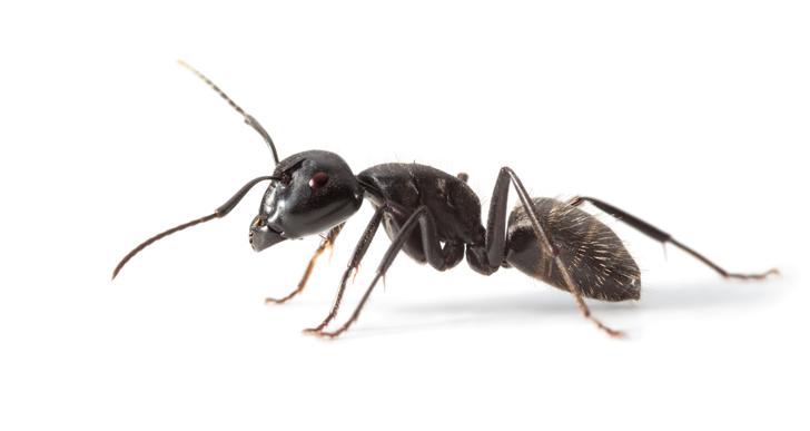 Active Ants opens distribution center in Belgium